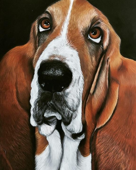 Portrait d'un basset hound. Ninon Cobergh Ninon Cobergh