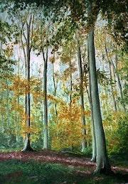 La forêt de hêtres-Forêt de Lyons-HauteNormandie.