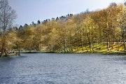 Au Milieu du Lac.