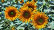 Цветы 040.