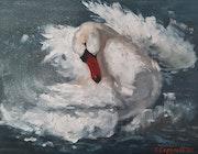 Swan. Setati