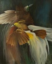 Pájaros. Iguazu Argentina. Marcelo Buccella
