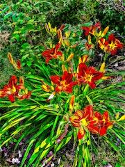 Цветы 041. Fluidartfill