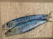 Les sardines méditerranéennes.