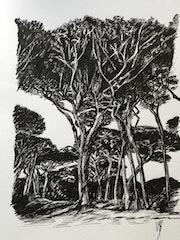 Les pins. Véronique M. Bonnand Vmb