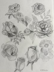 Les roses en forme. Marc Vandenbussche