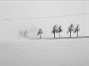 Nebelbäume. Jana Linn