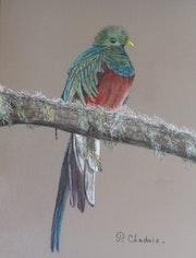Le Quetzal resplendissant.
