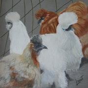 Les poules de Mios.