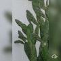 Cactus Juin 2021. Cpcréations
