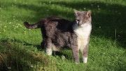 Le chat ouvrit les yeux, le soleil y entra… (M. Carême).