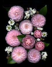 Flower Composition 31 by Fretta Cravens.