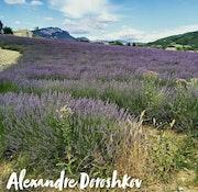 Provence. Baloban Nadège