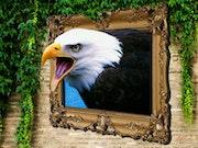 Белоголовый орлан с картины.