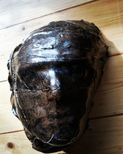 Reprobation Mask 16. Straiph Wilson