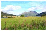 Scotland. David Lacey