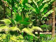 Jardin de la Petite Afrique- Monaco. Anita De Martini