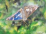 Papillon. Gilles Duguet