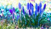 Цветы 060.