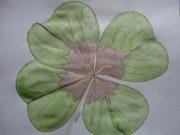 Beau trèfle a quatre feuilles. Irène
