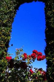 Unas rosas.
