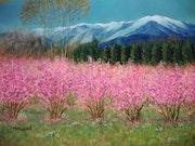Le Canigou, montagne sacrée des Catalans et les pêchers en fleurs.