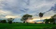 Sunset in green field. Tan Dat Nguyen