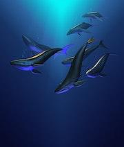 Les baleines, whales.