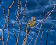 Птицы 036 40х50.