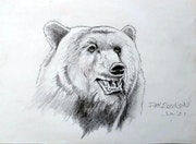 Oso Grizzly. Rex Robinson