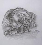 Original drawing of a boxer dog. Jean Duffus