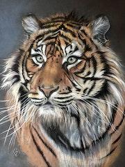 Tigre majestueux.