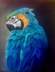 Perroquet bleu.