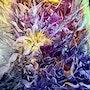 Abstraction. Elizabeth Estienne