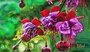 Цветы 079. Fluidartfill