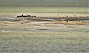 Le repos des phoques. Hervé Hameury