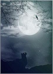 Scène nocturne.
