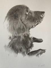 Portrait de Pollux. Lucie Richard