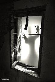 Shadow. Rémy Donnadieu