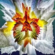 Coeur de fleur. A'm