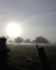 Brouillard… Et champs de pommiers.. Christiane Carassou