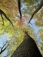 L'arbre et ces tout. Rudi Julet