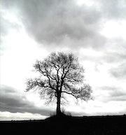 Bel arbre. Rudi Julet