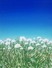 Flower meadows. Angel Patchamanov