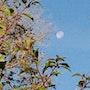 Quand la lune a rendez vous avec…. Christiane Carassou