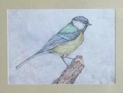 Little bird. Ivan Rankovic
