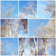 Nature bleu. Rudi Julet