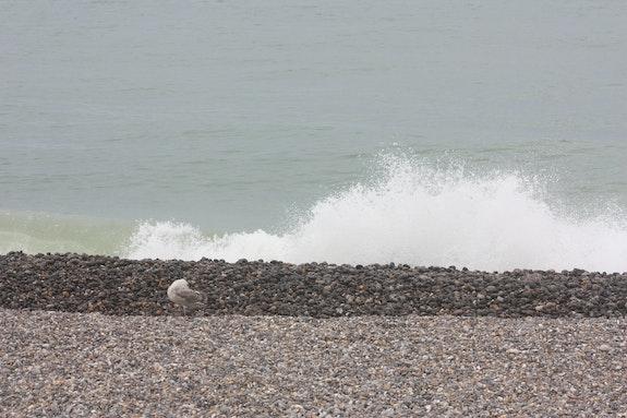 Petite toilette devant les grandes marées! ! !. Nathalie Hochard-Gaudry Nathalie Hochard-Gaudry