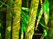 Ombre & Lumière sur les Bambous. Anita De Martini