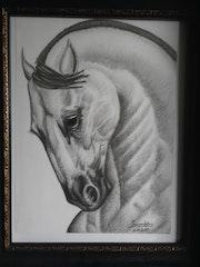 Horse beauty ll.